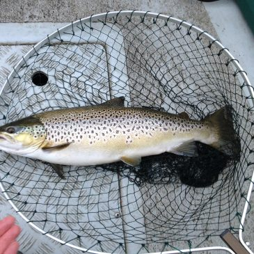 Loch Leven Fishing Report – Week Ending 19th July 2015