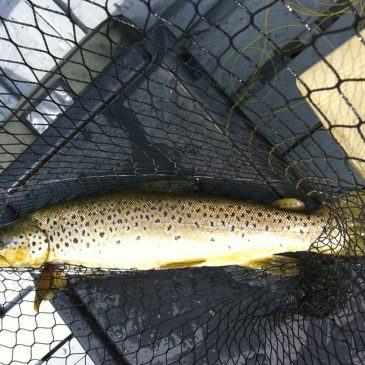 Loch Leven Fishing Report – Week Ending 8th May 2011
