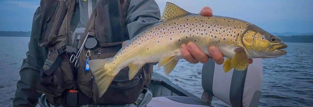 Loch Leven Brown Trout