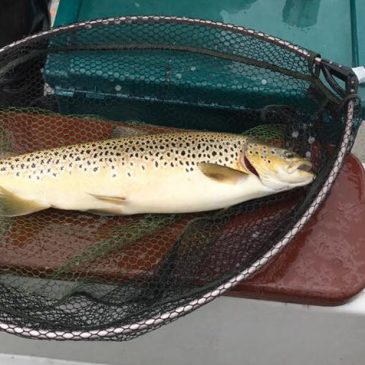 Loch Leven Fishing Report – period ending 26th July